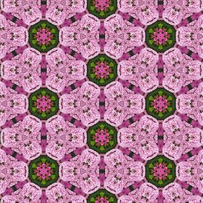 Candy Cane Phlox Floral Photo Pattern Pink and White