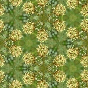 Queen Anne's Lace White and Green Floral Photo Pattern
