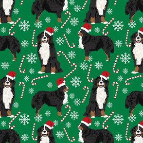 Bernese Mountain Dog peppermint stick candy canes winter snowflakes dog fabric green