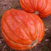 Hidden Pumpkin Spirit