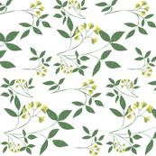 Botanic Woodblock MimosaR