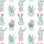 Rcute_potted_succulents_shop_thumb