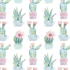 Cute Potted Succulents