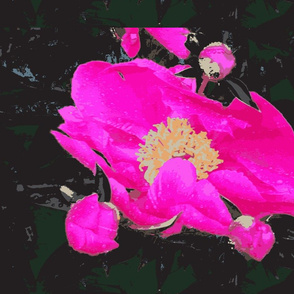 IMG_1477-ch
