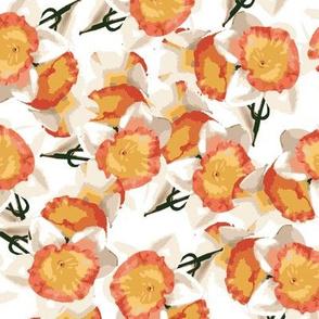daffodils_on_white