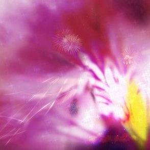 Geranium burst