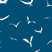 Bondi Gulls