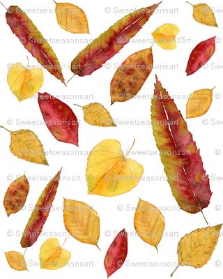 """""""Fall""""ing in Love"""