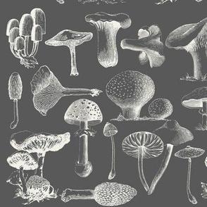 Mushrooms_on_Gray