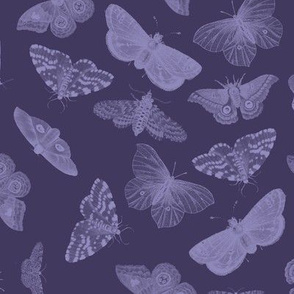 Butterflies in Amethyst