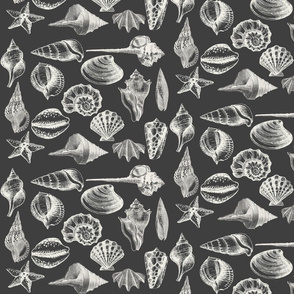 Seashells on Dark Charcoal