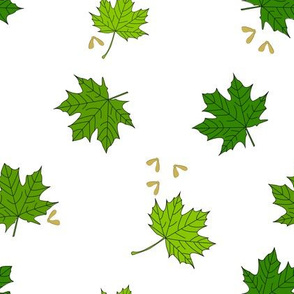 Maple leaves with fruit