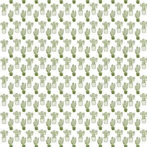 Green Cacti on White