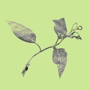 Dahlia Bud - Light Green Grey