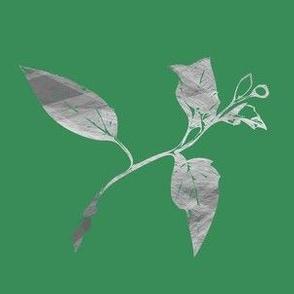 Dahlia Bud - Green Grey