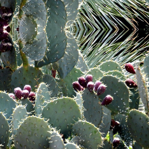 Oh, You Prickly Pear