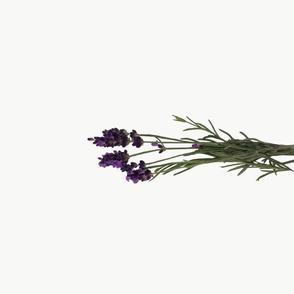 lavender_tea_towel