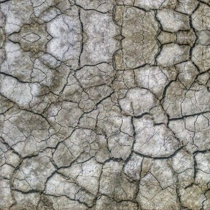 Cracked Desert Playa