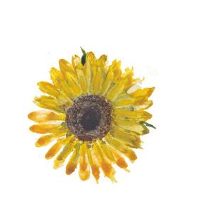sunflower_watercolor