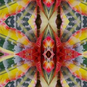 Rainbow Bromiliad