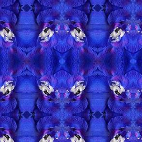 Symmagery Indigo Blue Delphinium