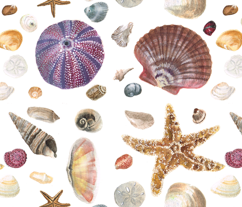 Watercolor Shells fabric by silly_bee's_chickadees on Spoonflower - custom fabric
