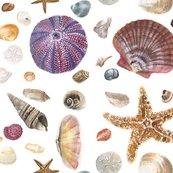 Shells_shop_thumb