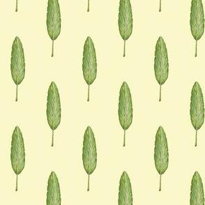 sage leaf, cream