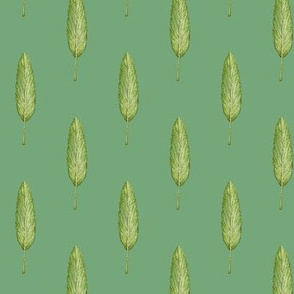 sage leaf, green
