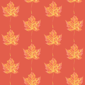maple_coral