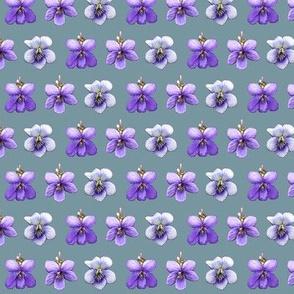 violets on blue