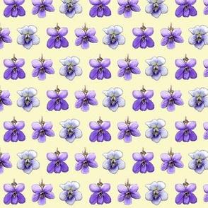 violets on cream