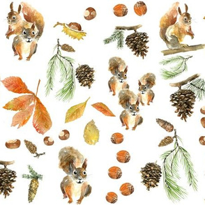 Autumn squirrel