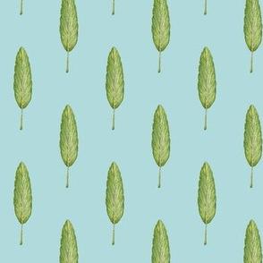 sage leaf, sky blue