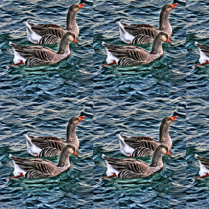 Geese On The Water