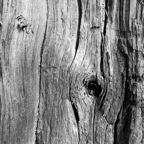 tree skin 1