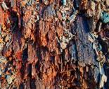 Treeskin2_thumb