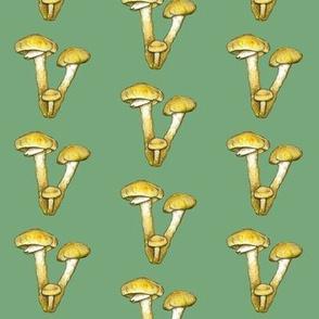 honeycap mushroom, green