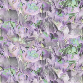 flower_lilac_texture