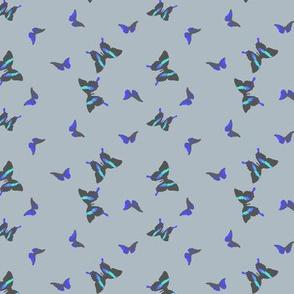 small_butterflies_blue_grey