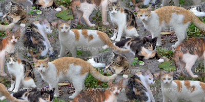 Rrrcalico_is_also_cats_preview