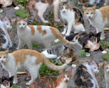 Rrrcalico_is_also_cats_thumb
