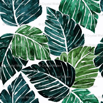 Monstera_Leaves-medium