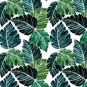 Rmonstera_leaves-rev_shop_thumb