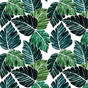 Monstera Leaves M