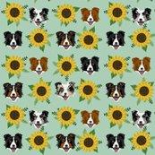 Rborder_collies_sunflower_shop_thumb