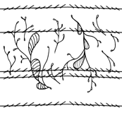 Barbed Leaf | Squiggle