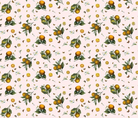 Rorange_oranges_butterflies_in_cream_shop_preview