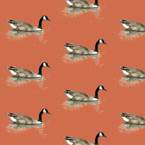 goose, red