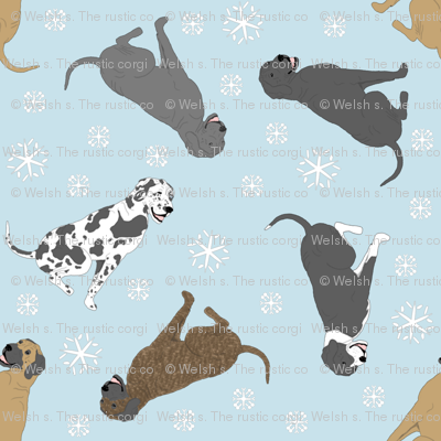 Tiny Great Danes - winter snowflakes